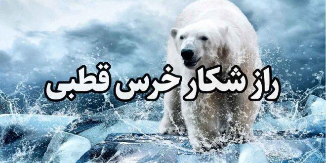 راز شکار خرس قطبی